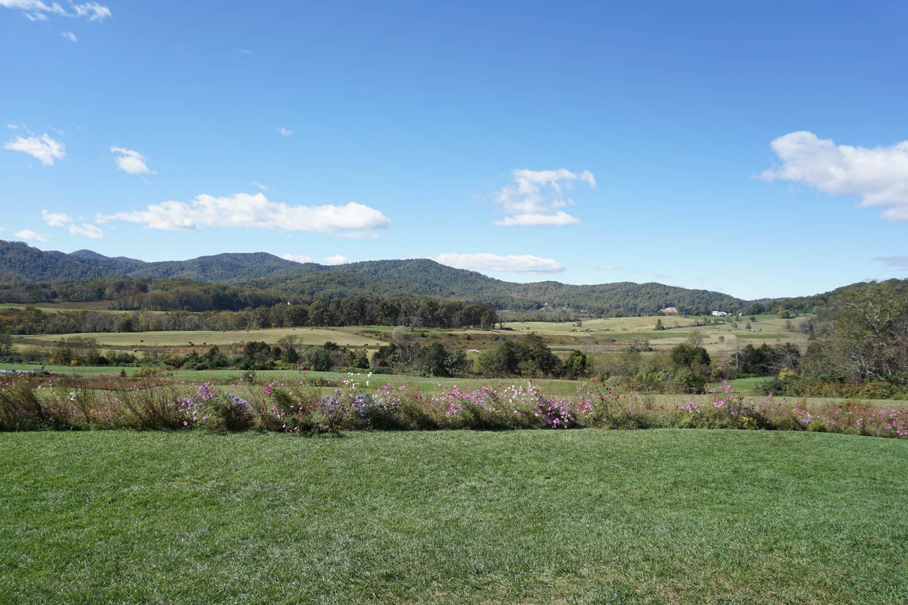 Pippin Hill Vineyard