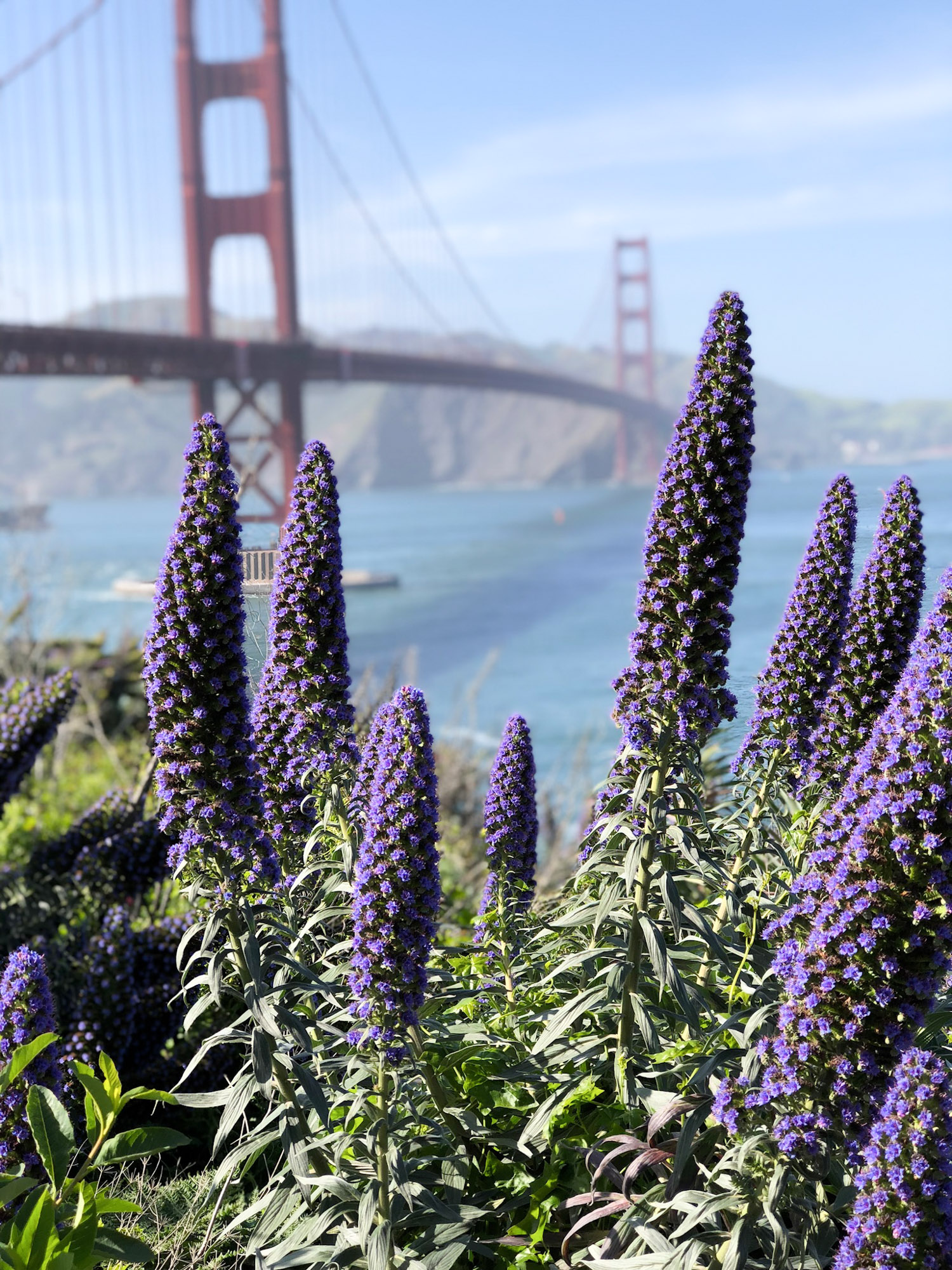 Weekend in San Francisco - Fun Things to Do in San Francisco featured by popular DC travel blogger, Monica Dutia