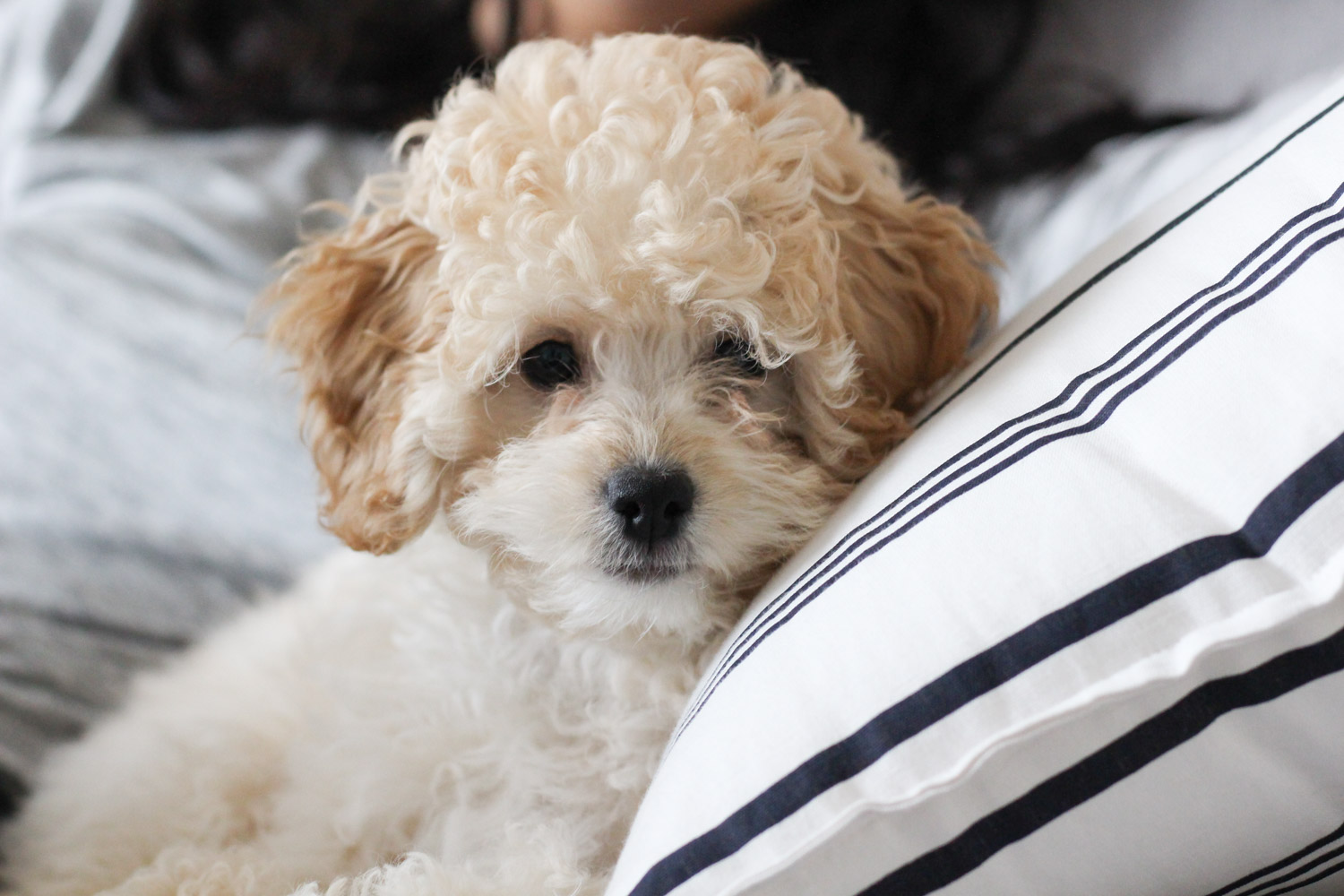 Meet Millie - Millies Adoption Story, featured by popular DC lifestyle blogger, Monica Dutia