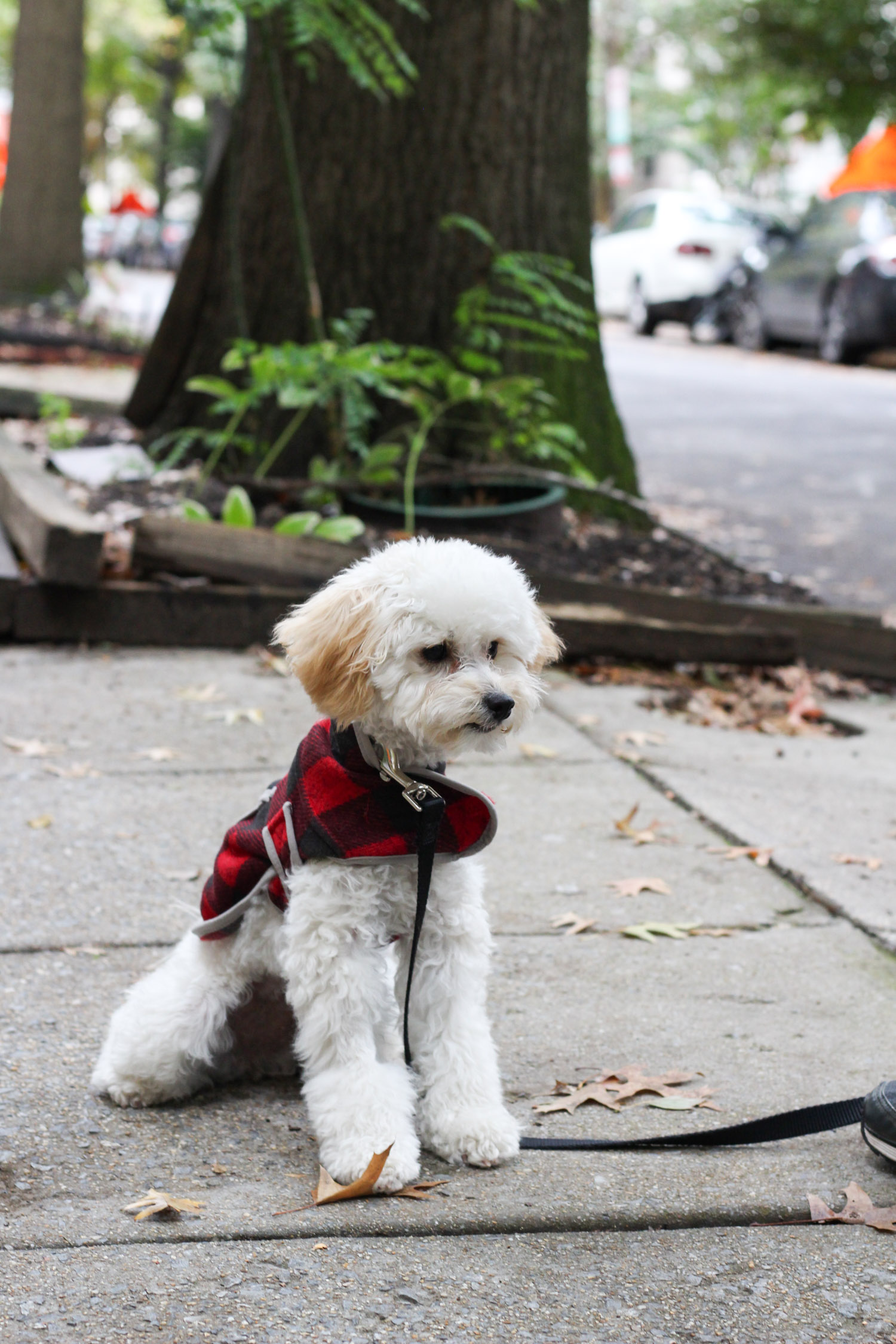 LL Bean Sweater Fleece review by DC fashion blogger, Monica Dutia